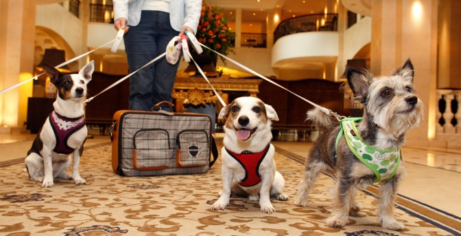 Dogs arrive in a hotel, Top Pet-Friendly Hotels and Resorts