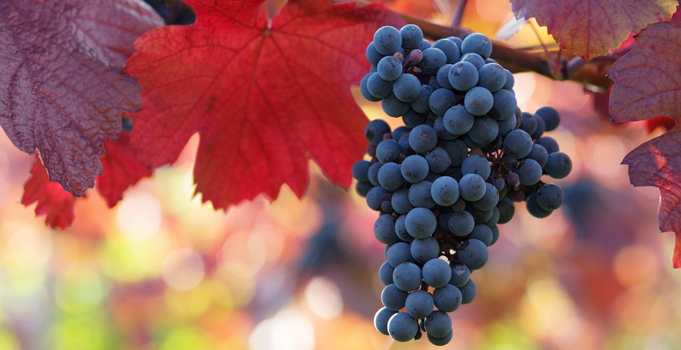 6 Wineries Not in California