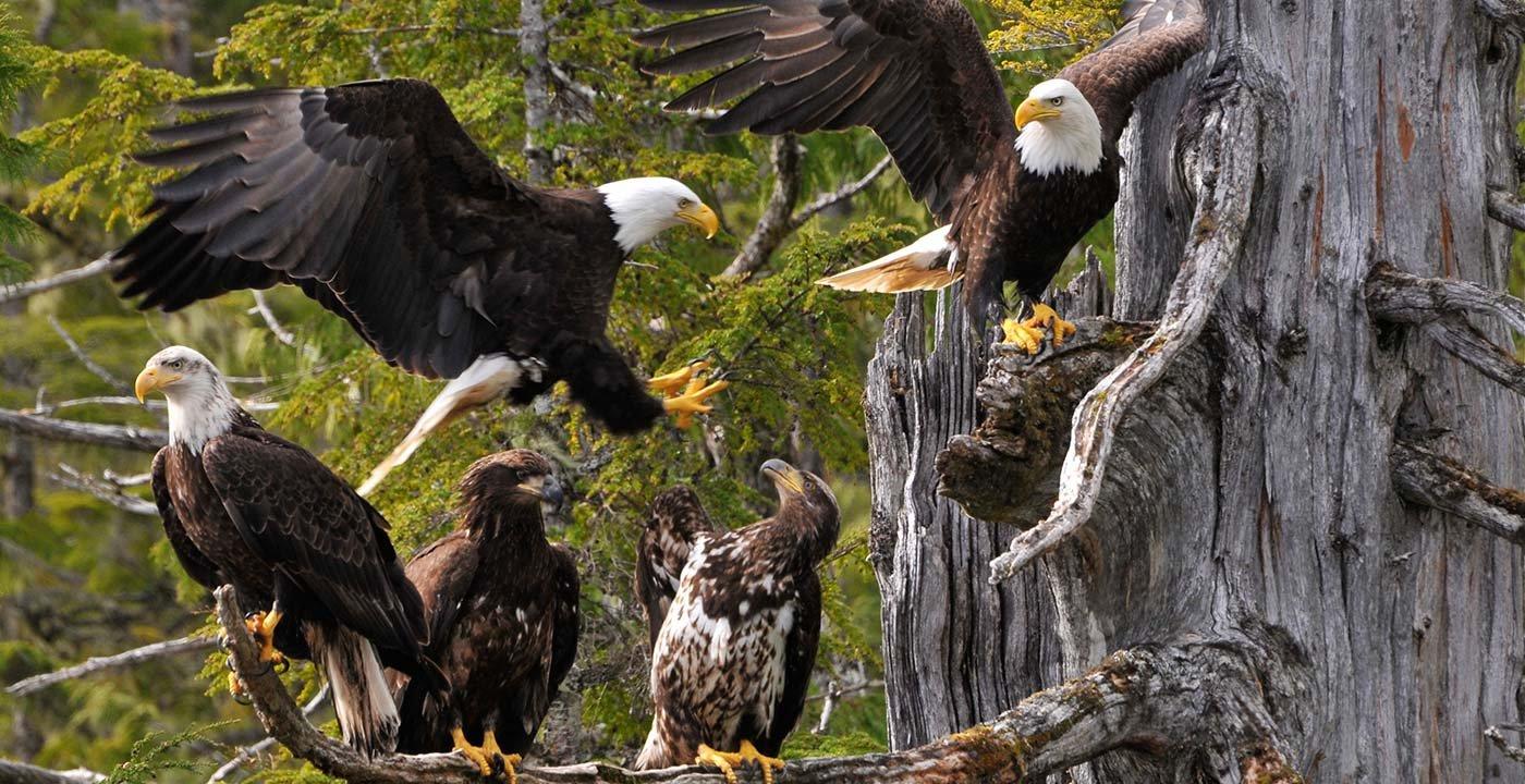 'Eagle Capital of America'