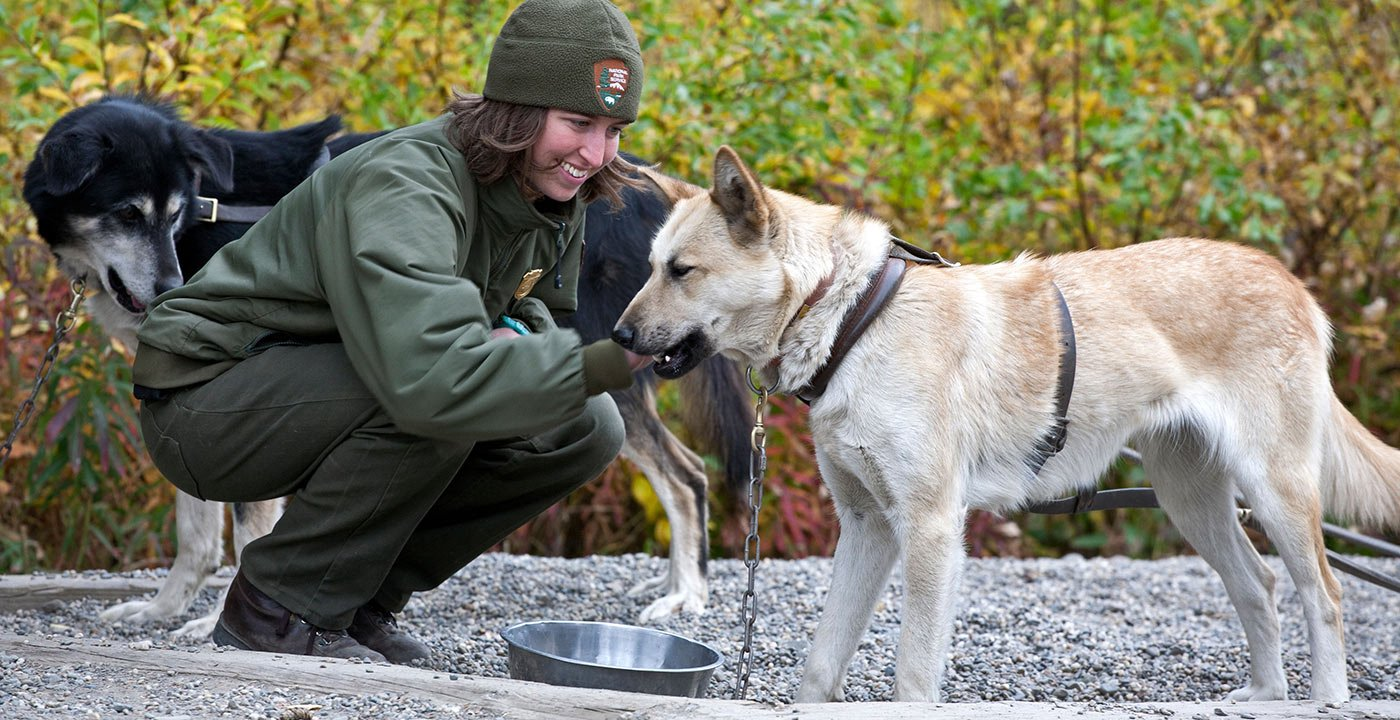 The Hard-Working (and Lovable) Dogs of Denali