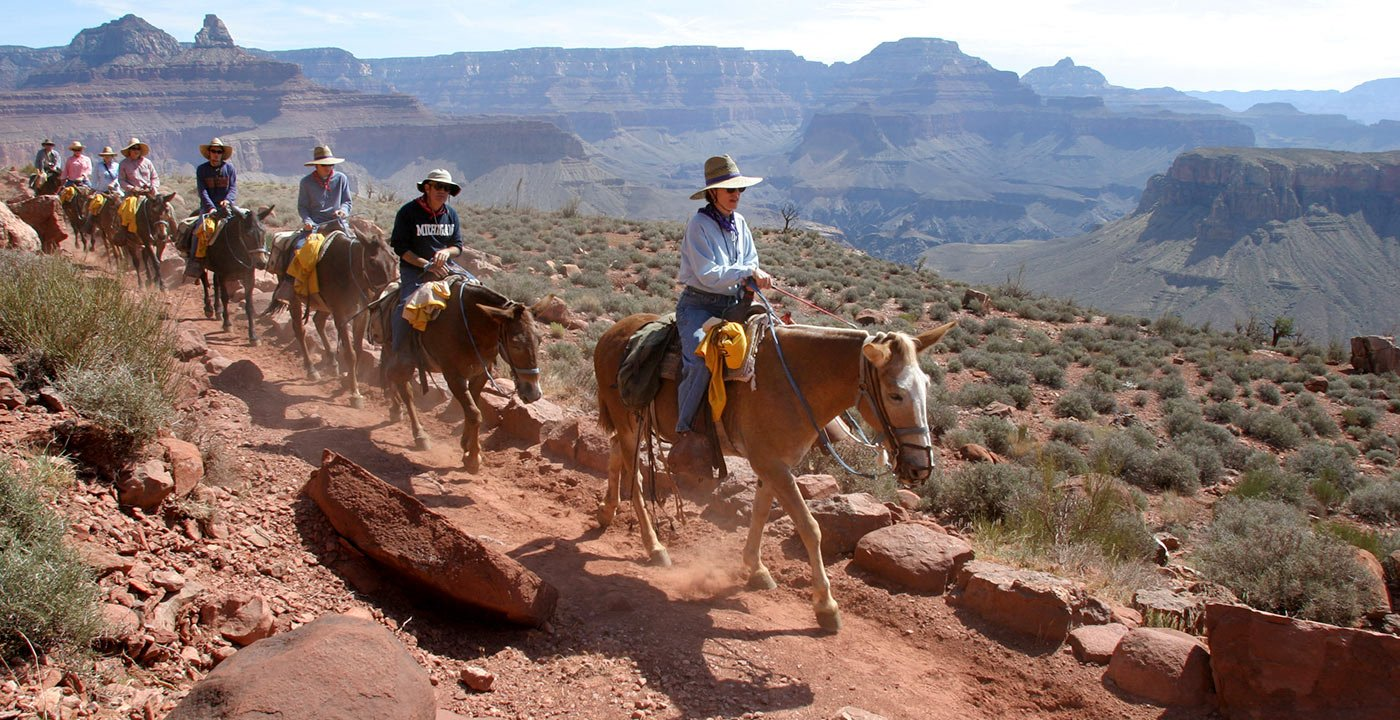 A Four-Legged Ride Into the Inner Canyon