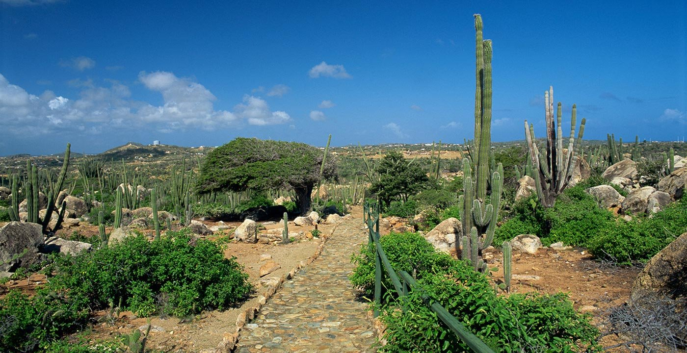 Find Adventure on Aruba's Rugged North Side