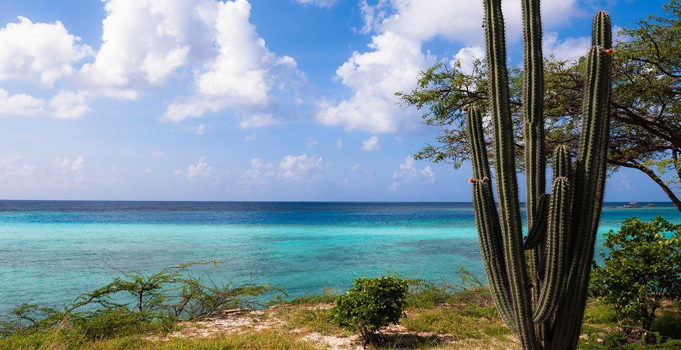 Great Snorkeling Is Easy to Reach on Aruba