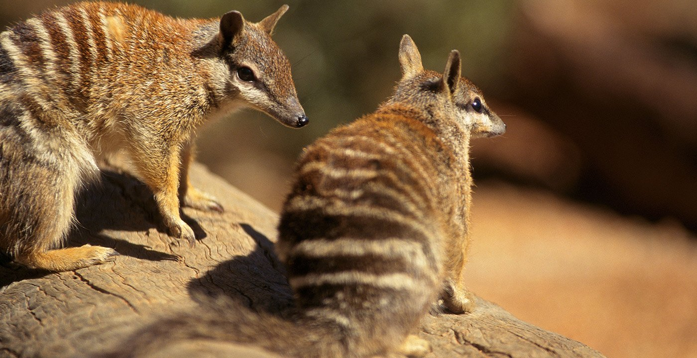 Learn About the Red Centre's Flora and Fauna