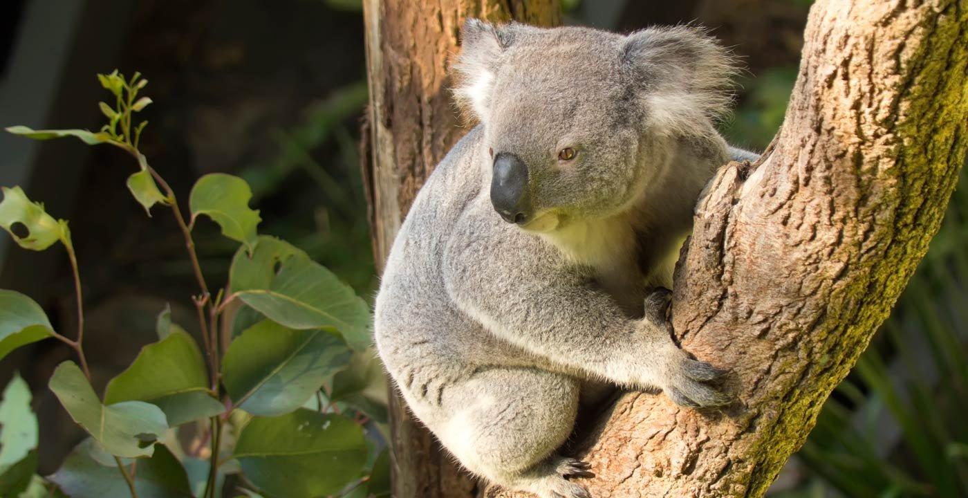 Taronga Zoo for Wildlife and Harbor Views