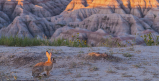 Badlands Park, SD