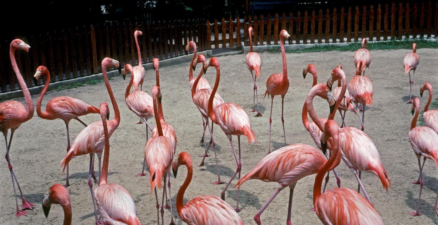 Animals Abound at Ardastra Gardens and Zoo