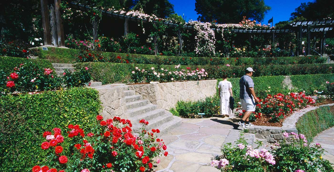 Berkeley vacation travel guide and tour information aarp Berkeley rose garden
