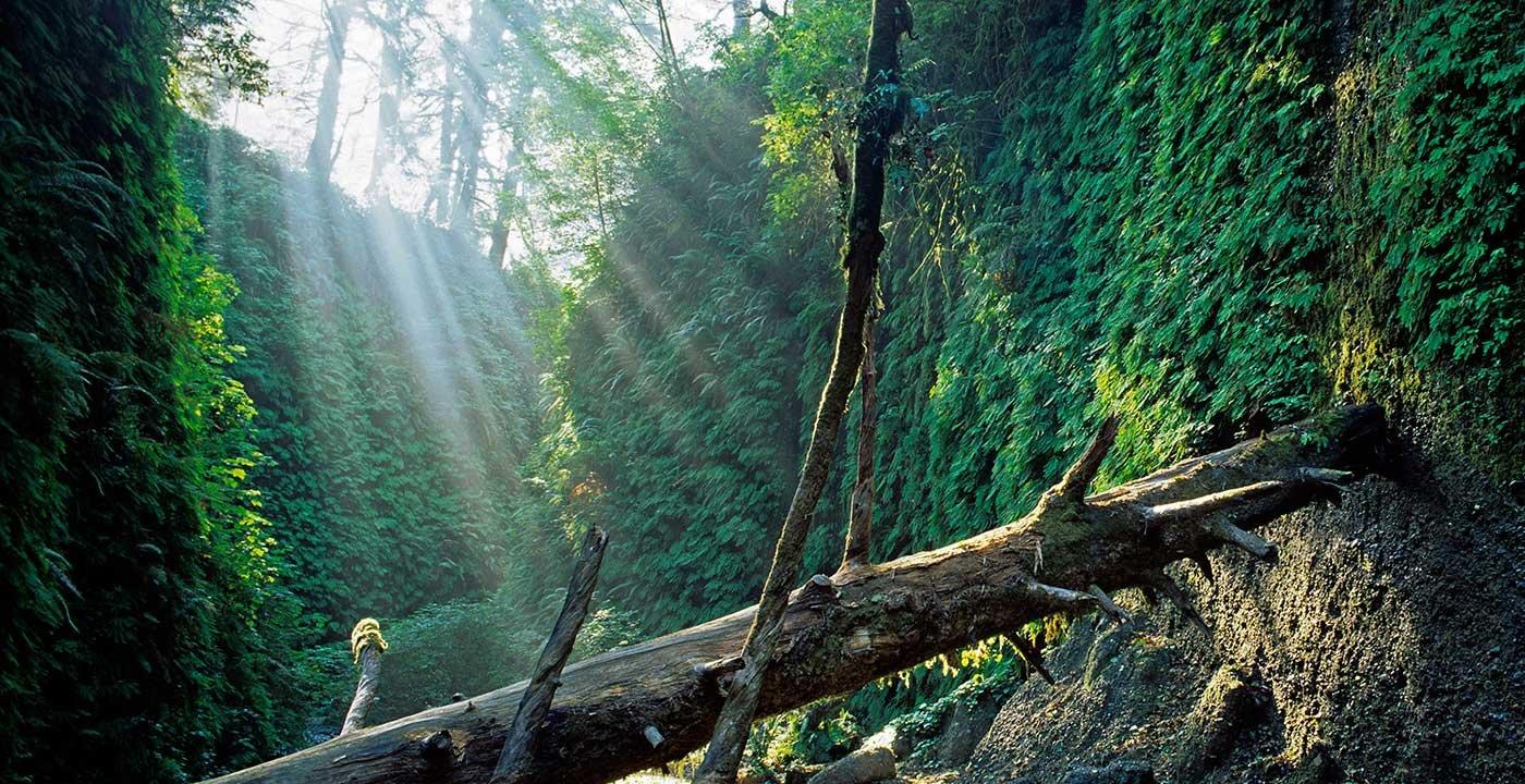 Stroll Through Magical Fern Canyon