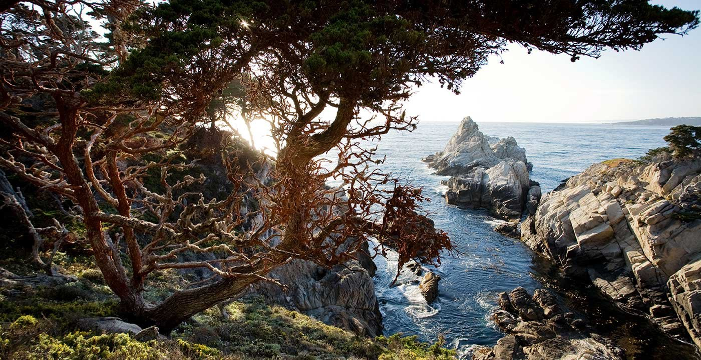 Explore Point Lobos State Natural Reserve
