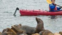 Monterey Bay Kayaks