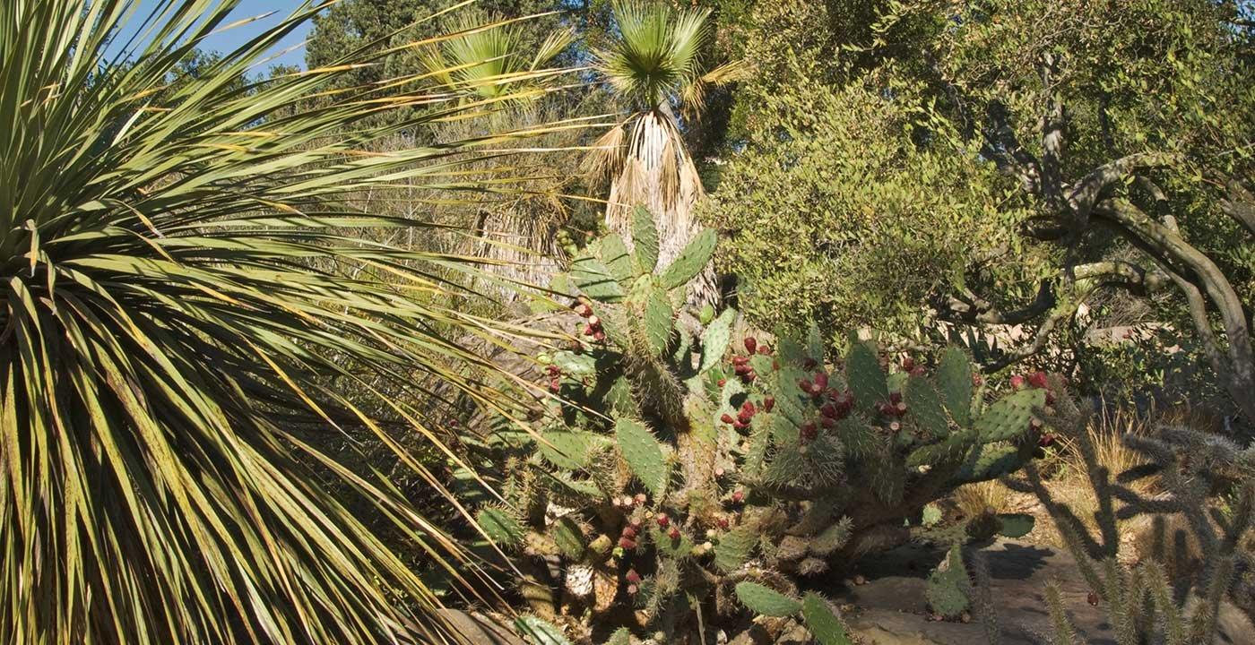 Go Native At The Santa Barbara Botanic Garden