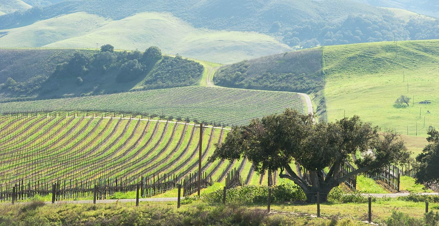 Food and Wine Weekend Getaway in Paso Robles