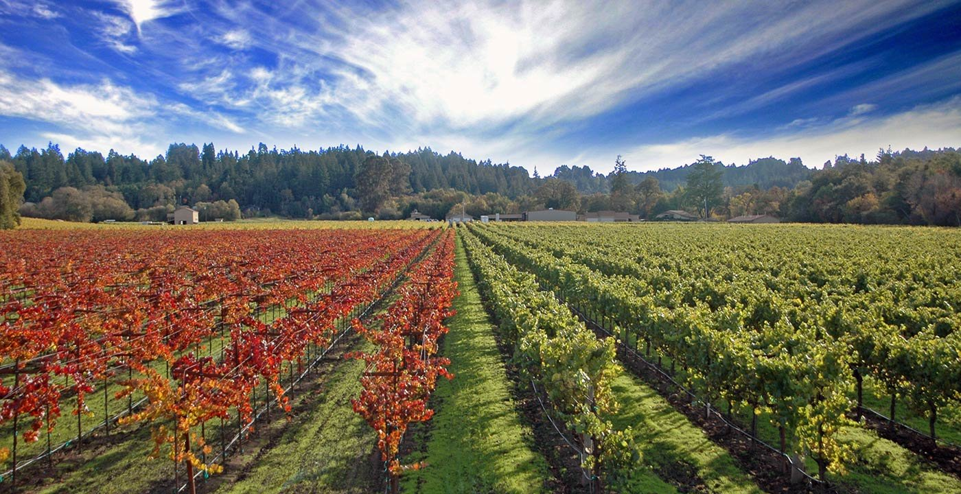Food and Wine Weekend Getaway in Sonoma County