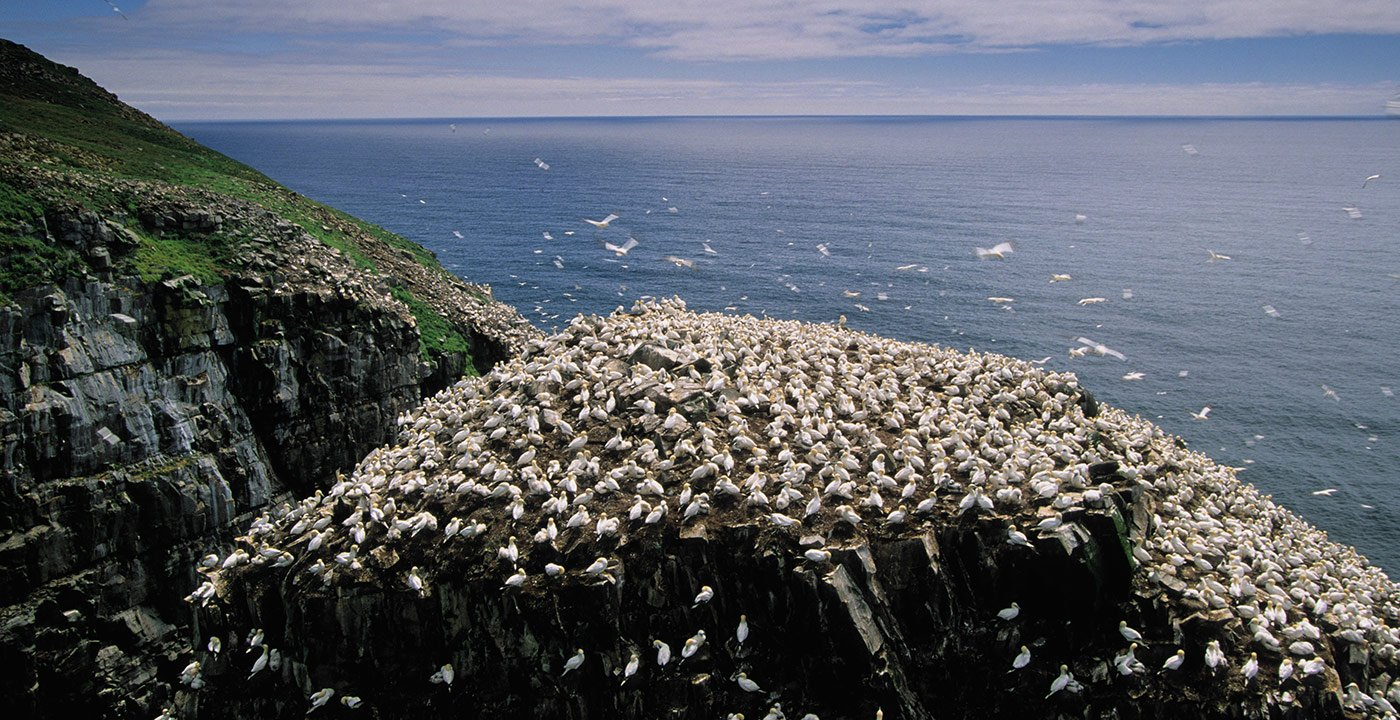 Cape St. Mary's: A Spectacle of Wild Nature