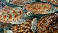 Close Encounters With Island Wildlife