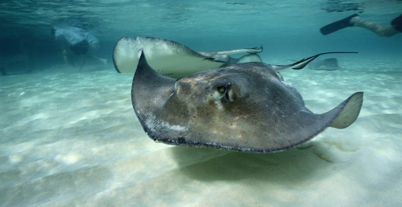 Stingray City: A Great Marine Adventure