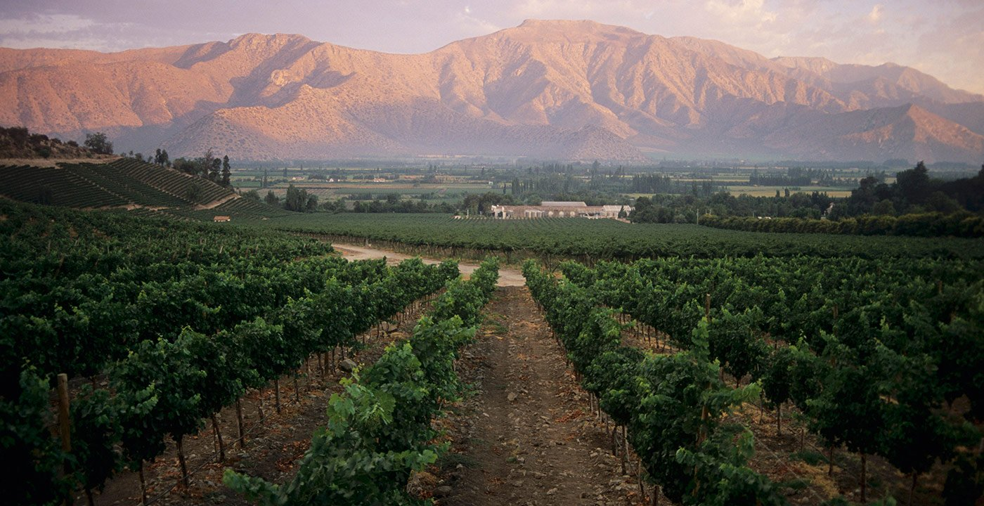 Tour Chile's Finest Wine-Growing Regions