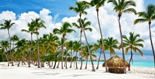 Dominican Republic Palms