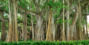 Trees in Sarasota