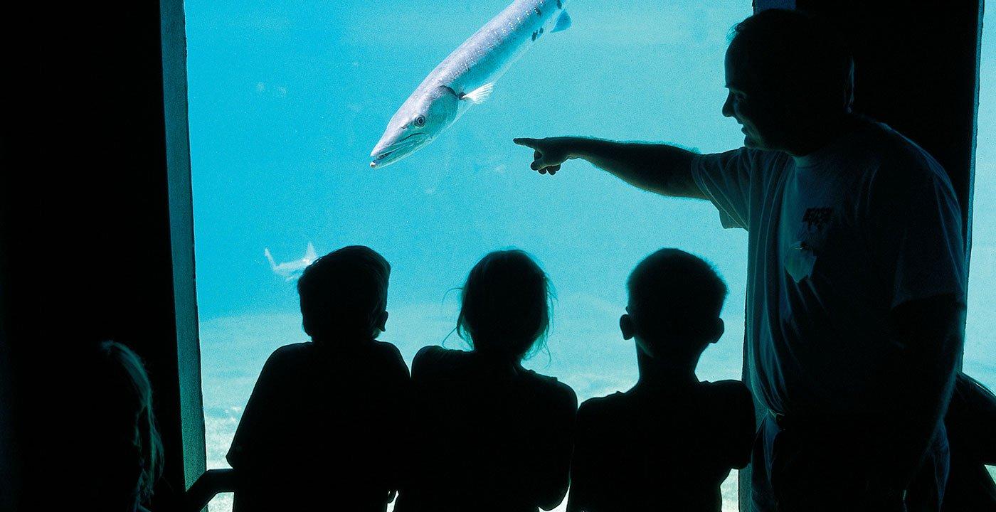 Dive In at the Mote Aquarium