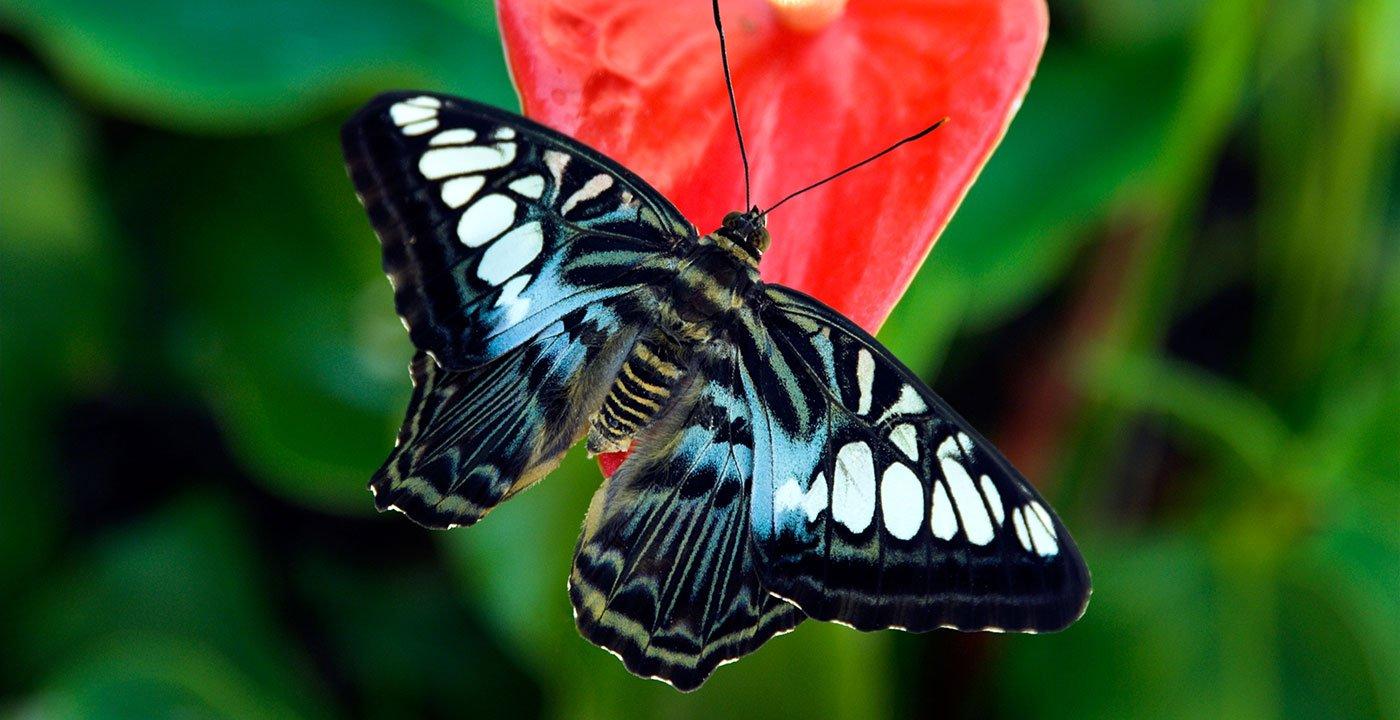 Butterflies Fly Free