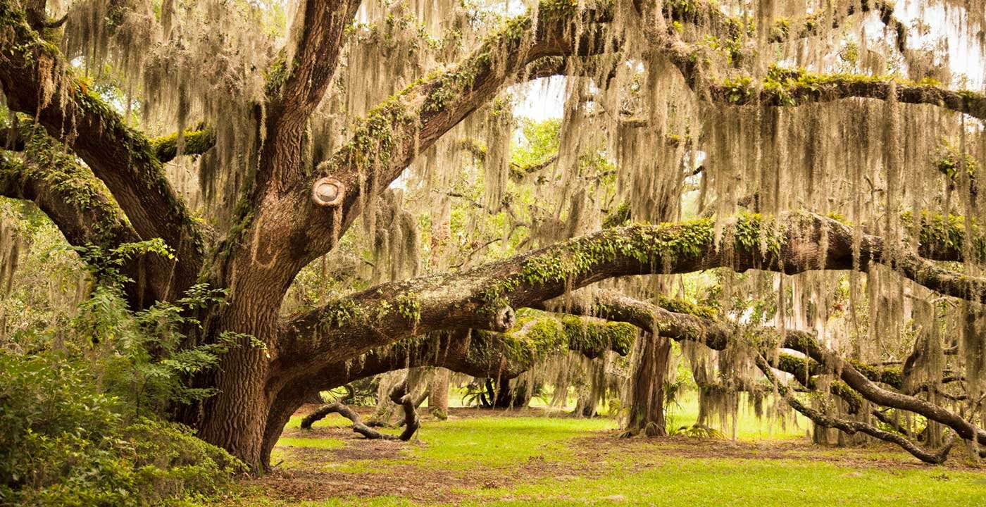 Jekyll Island Vacation Travel Guide And Tour Information