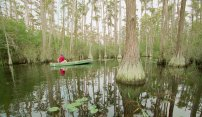 Paddle the Wild in Stephen C. Foster State Park