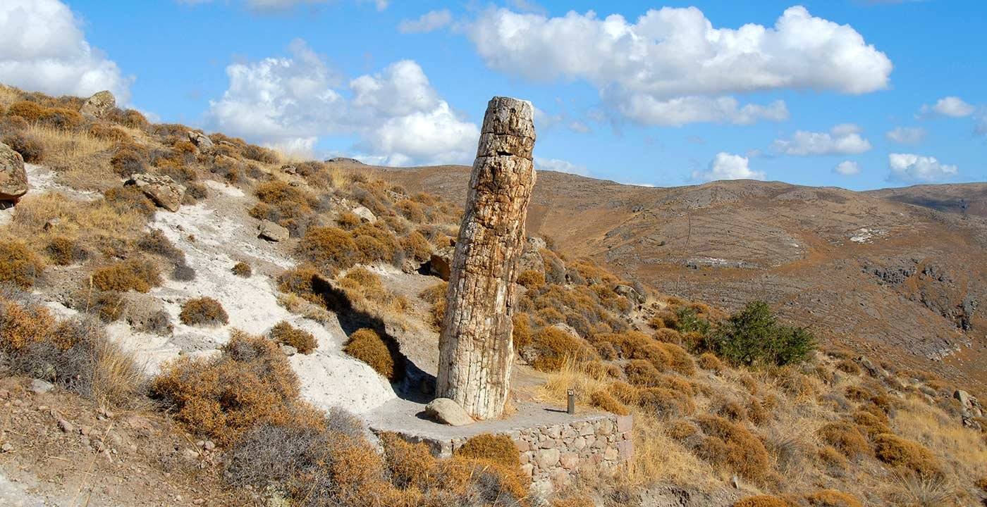 Petrified Forest of Lesbos