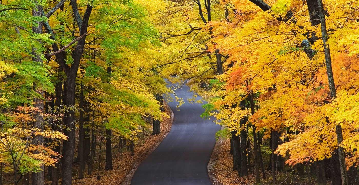 Fall Foliage in Nashville, IN