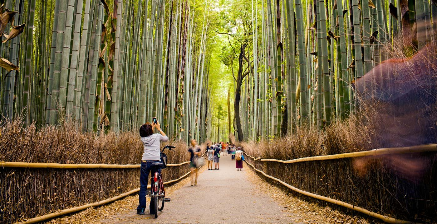 Walking through Bamboo Forest