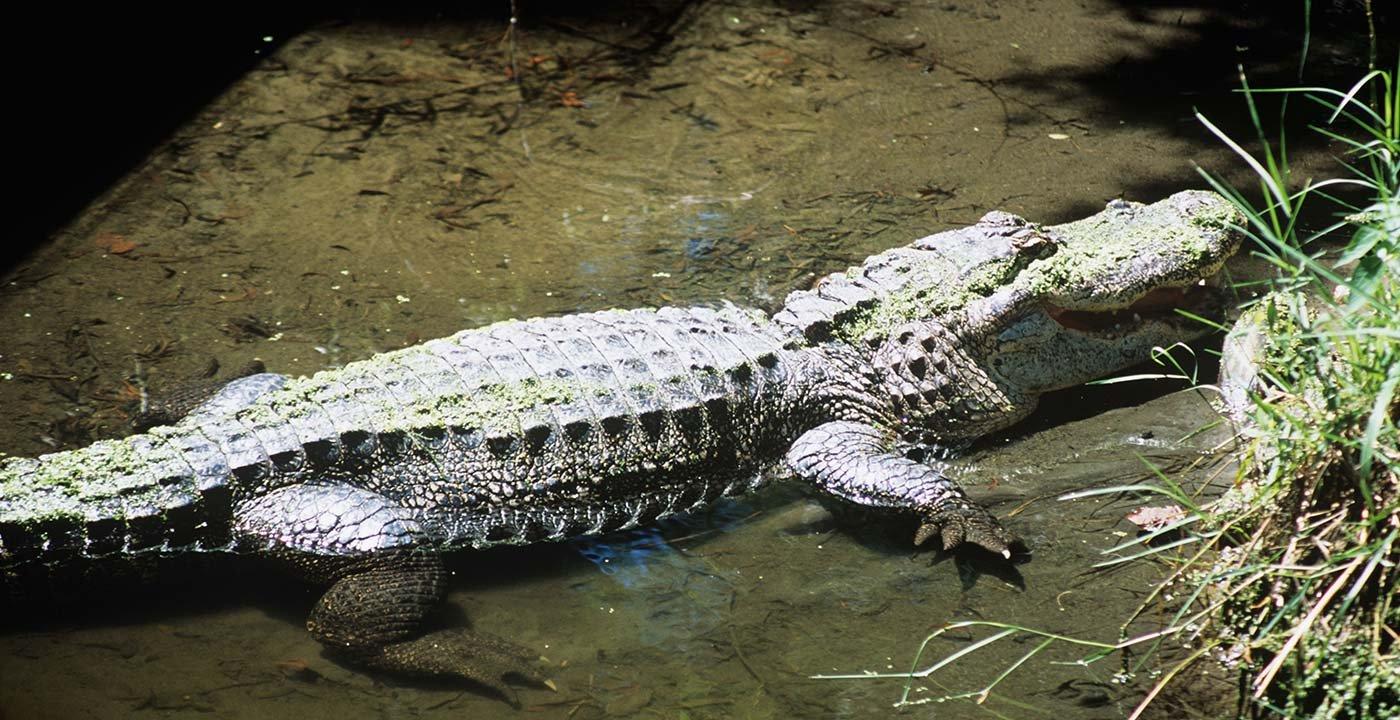 Bluebonnet Swamp, a Family-Friendly Outdoors Adventure