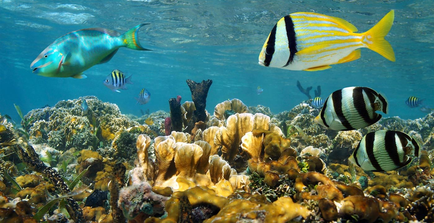 Coral Reef near Cozumel