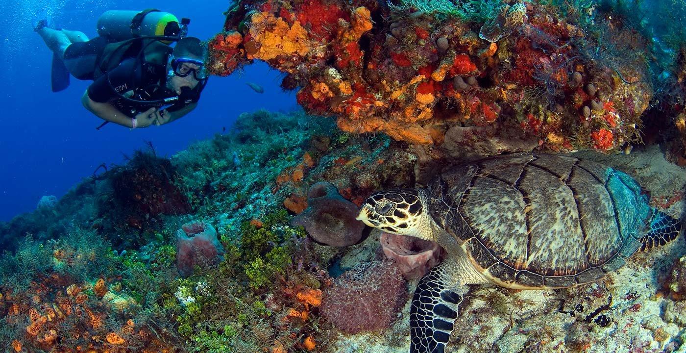 Kaleidoscopic Undersea Life