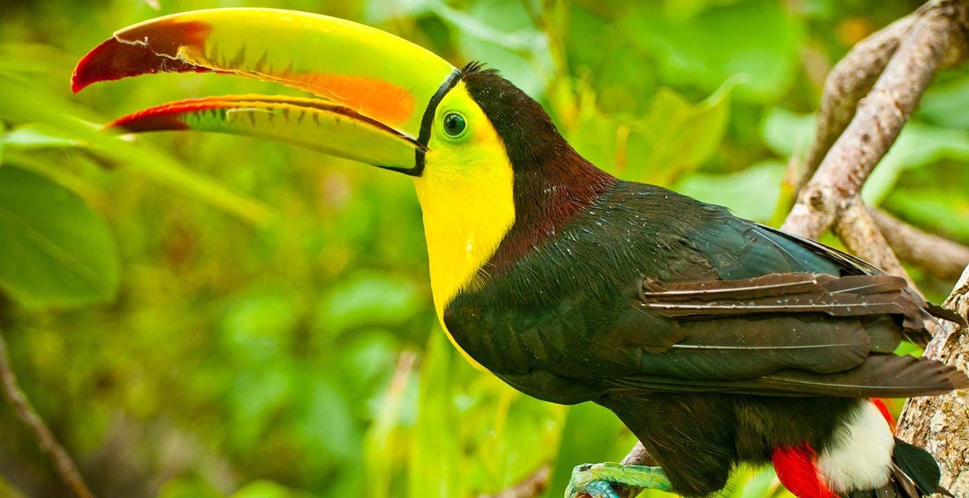 Parque Nacional de Quintana Roo