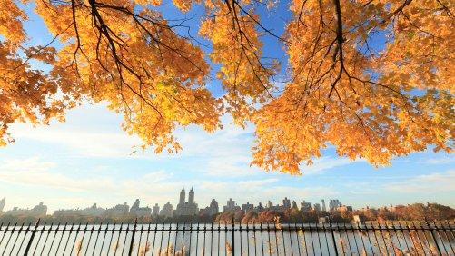 Behold Central Park