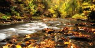 Autumn in Finger Lakes