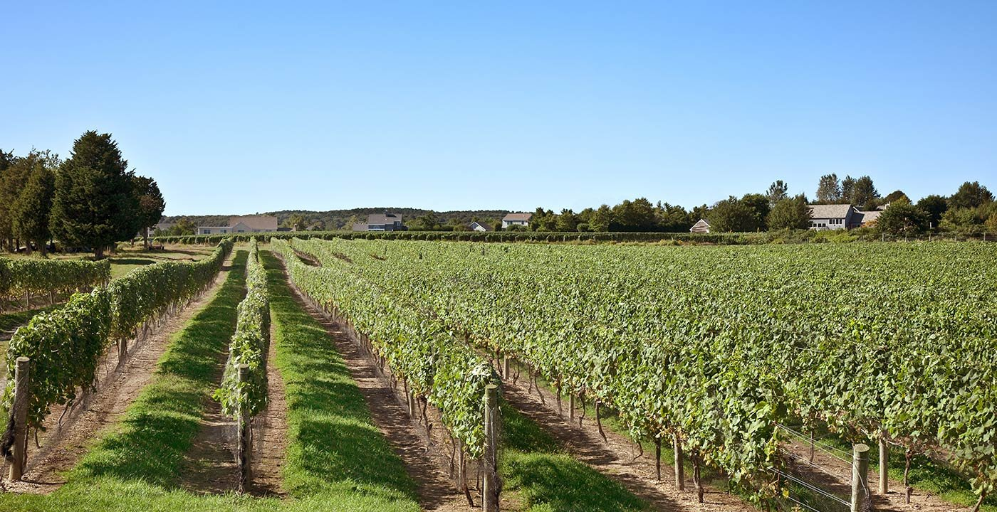 Wine Tasting Places In Long Island