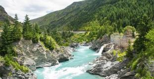 Kawarau River and Forest