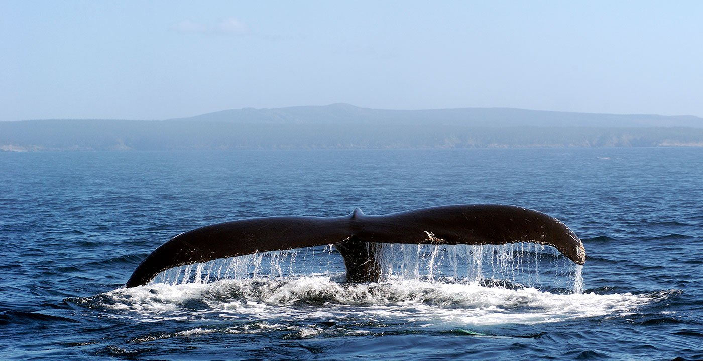 Whale-Watching Cruises