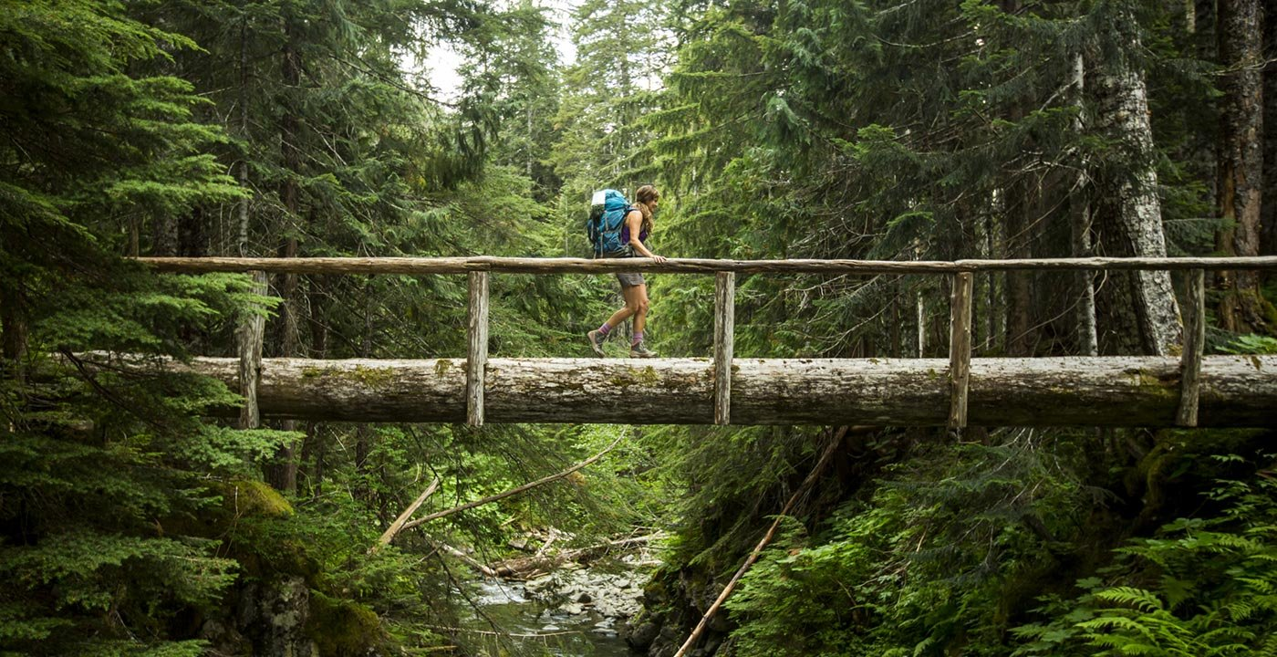 Bridge in Olympic National Park
