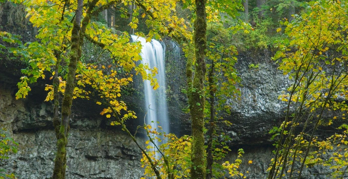 Silver Falls: Oregon's Favorite State Park