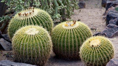 Visit the Desert Botanical Garden