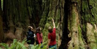 Redwood Parks