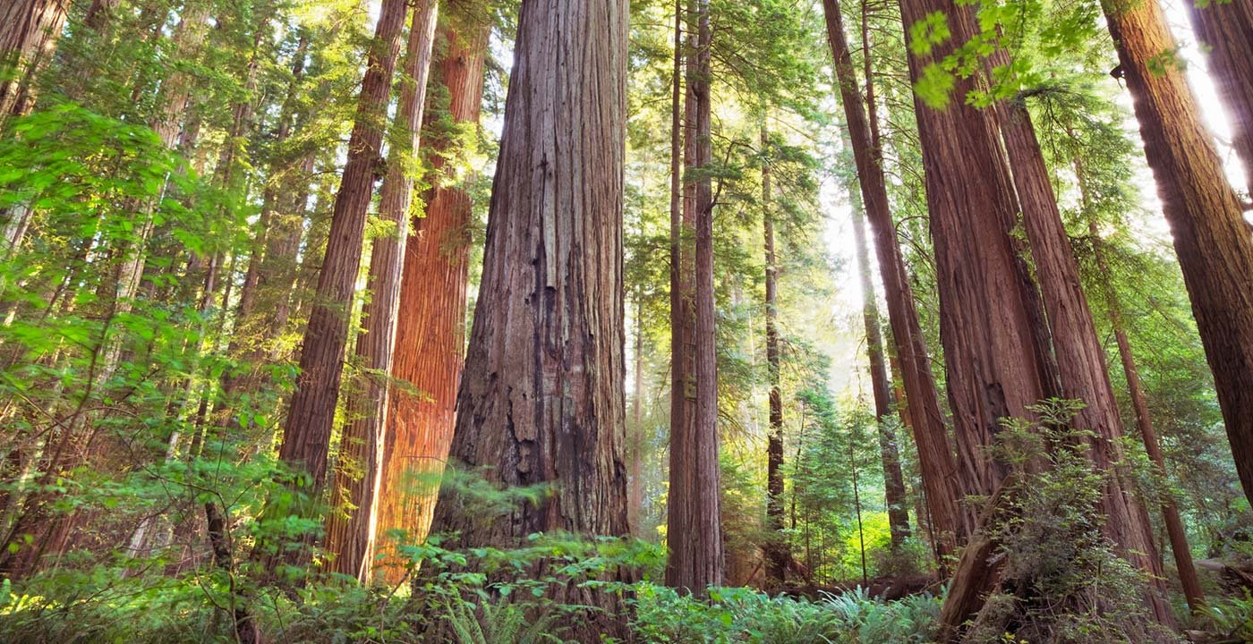 redwood national park america bucket list