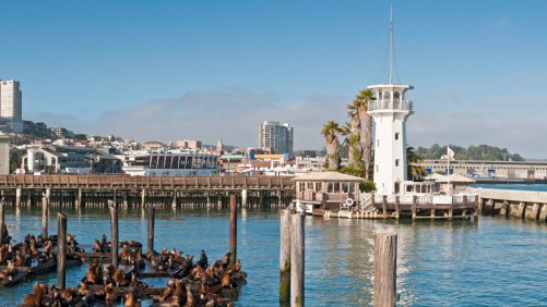 Let Fisherman's Wharf Reel You In