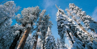 Snow in Sequoia National Park