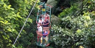 Tram in rainforest