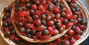 Baskets of nutmegs for sale in the market in Castries, St Lucia