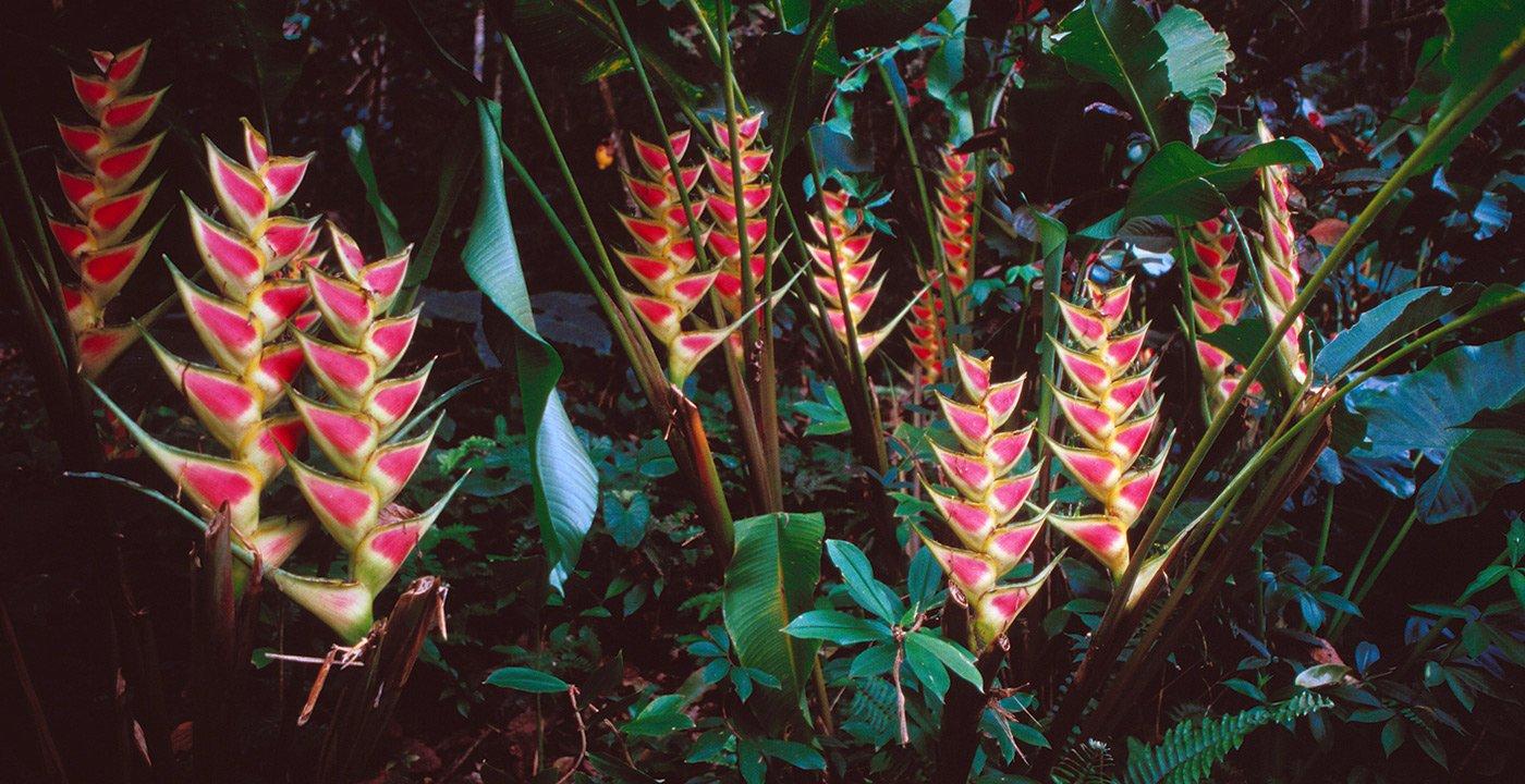 Enjoy Lush Diamond Botanical Gardens